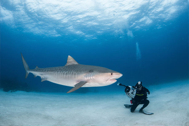 Underwater photographer Steve Cruz